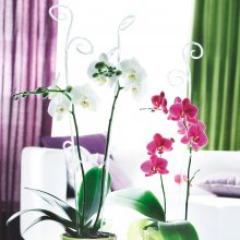 Orchideenstab transparent klar