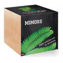 Feel Green EcoCube Mimose