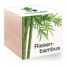 Feel Green EcoCube Riesenbambus