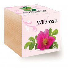Feel Green EcoCube Wildrose