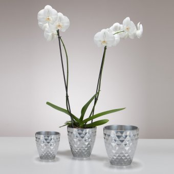 Orchideengefäß Crystal Metal