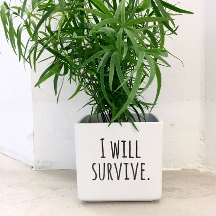 Personello I will survive Blumentopf