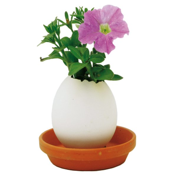 Noted Eggling Petunia