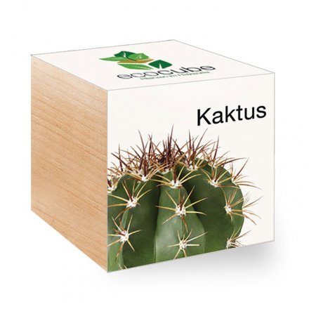 Feel Green EcoCube Kaktus